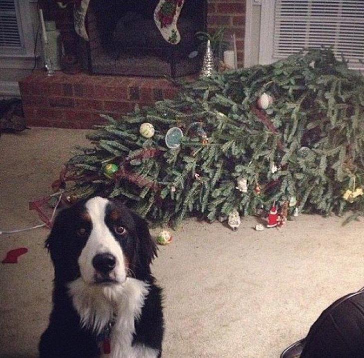 25 фото, чим зайняті собаки, коли господарів немає вдома - фото 22