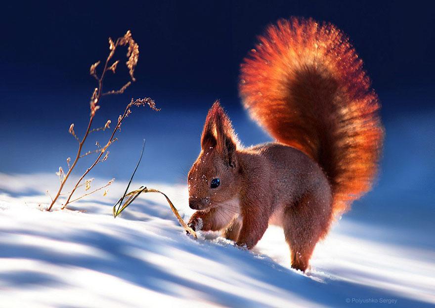 Надзвичайні фото тварин українського фотографа підкорили світ - фото 3