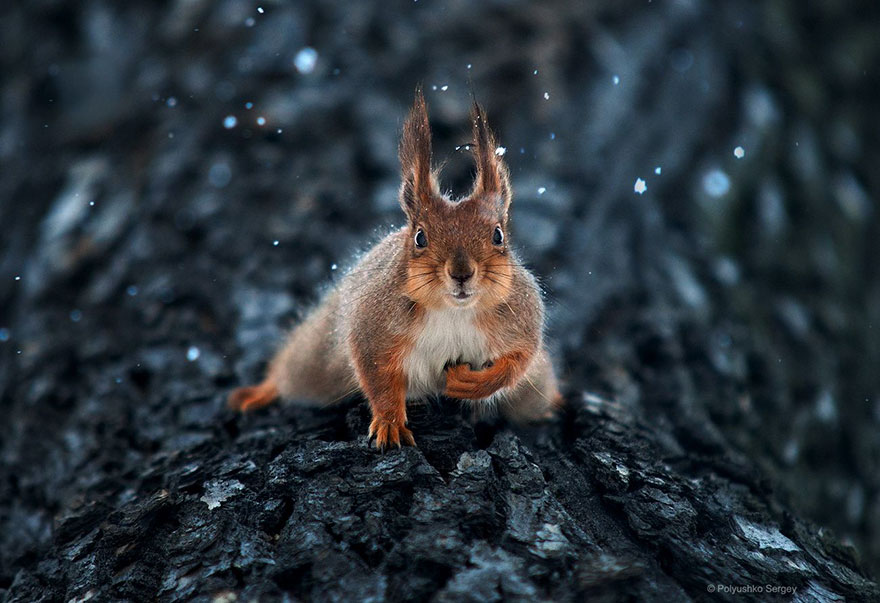 Надзвичайні фото тварин українського фотографа підкорили світ - фото 5