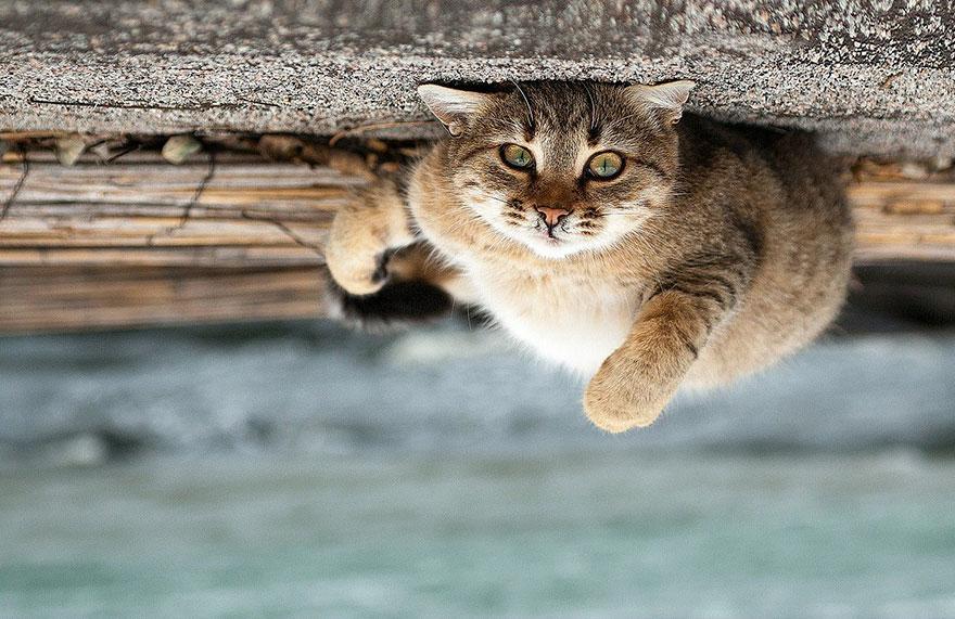 Надзвичайні фото тварин українського фотографа підкорили світ - фото 7