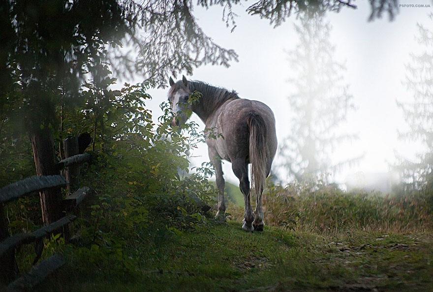 Надзвичайні фото тварин українського фотографа підкорили світ - фото 9