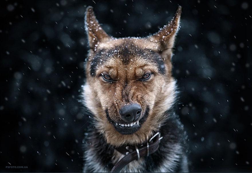 Надзвичайні фото тварин українського фотографа підкорили світ - фото 4