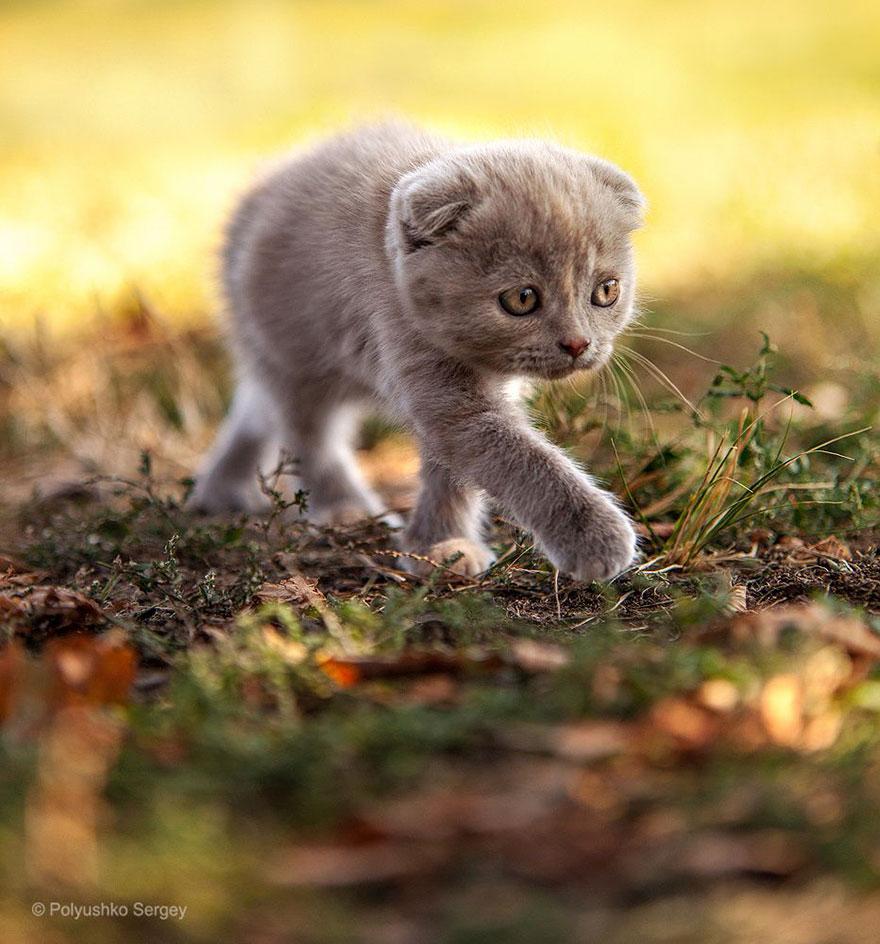 Надзвичайні фото тварин українського фотографа підкорили світ - фото 2