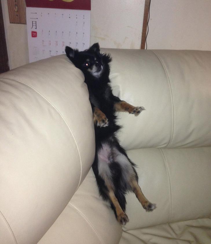 25 фото, чим зайняті собаки, коли господарів немає вдома - фото 12