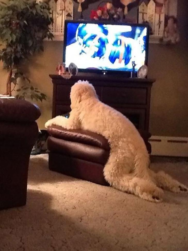 25 фото, чим зайняті собаки, коли господарів немає вдома - фото 5
