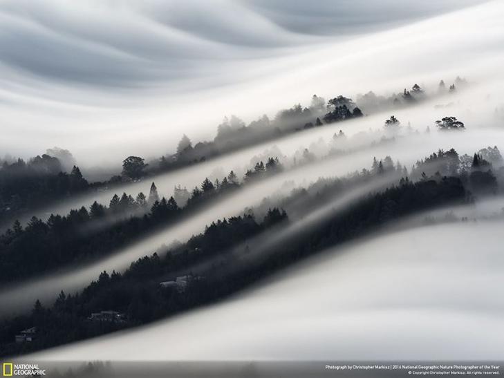 """Роботи фіналістів конкурсу National Geographic """"Кращий фотограф природи 2016"""" - фото 6"""
