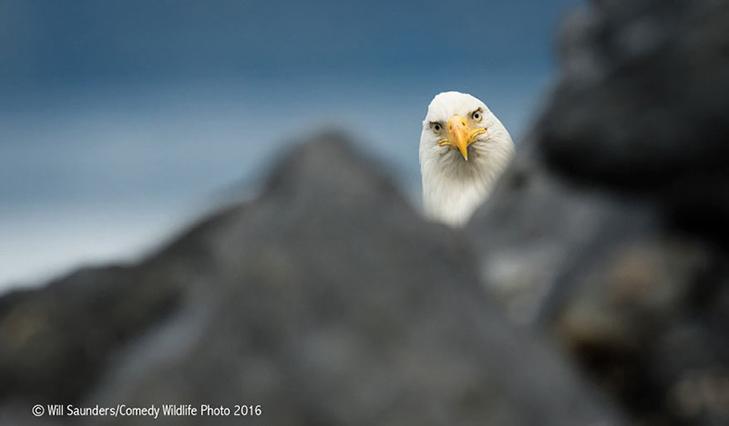 40 найсмішніших тварин з конкурсу Comedy Wildlife Photography Awards 2016 - фото 41