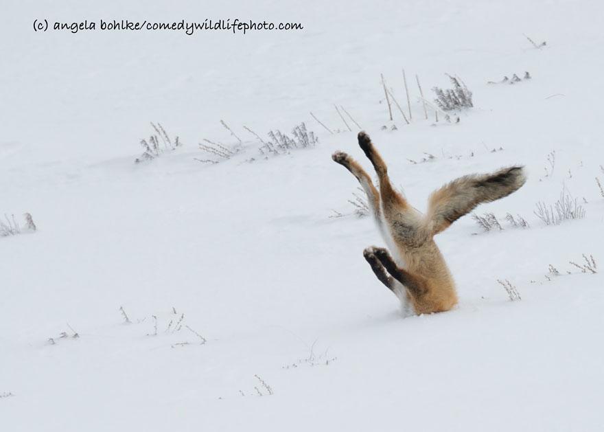 Сова з роздвоєнням особистості і ненаситний хом'як: ТОП-7 найсмішніших фото тварин - фото 6