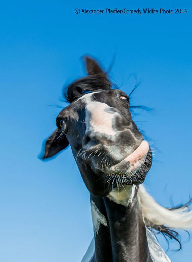 40 найсмішніших тварин з конкурсу Comedy Wildlife Photography Awards 2016 - фото 39
