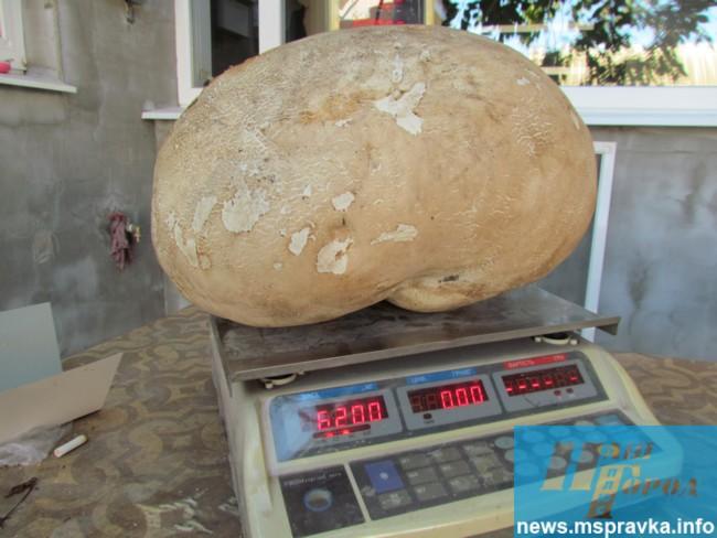 На Запоріжжі знайшли шестикілограмовий гриб-гігант - фото 2