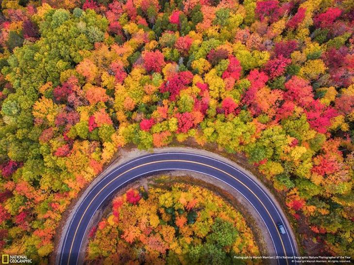"""Роботи фіналістів конкурсу National Geographic """"Кращий фотограф природи 2016"""" - фото 11"""