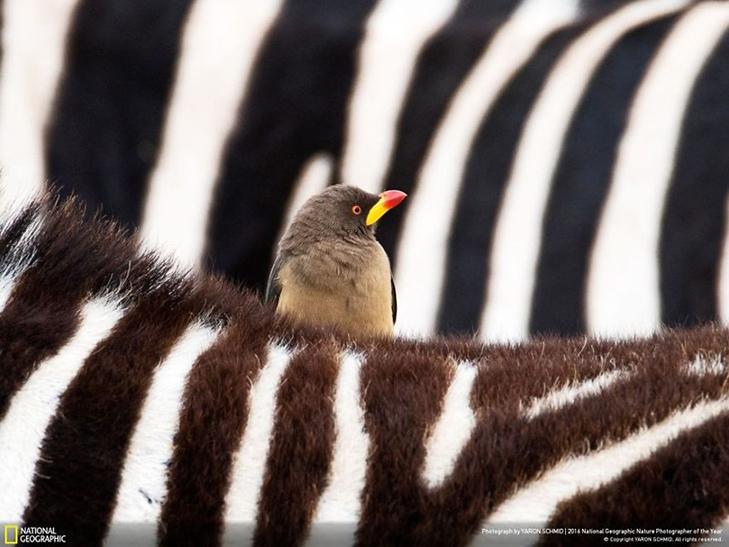 """Роботи фіналістів конкурсу National Geographic """"Кращий фотограф природи 2016"""" - фото 29"""