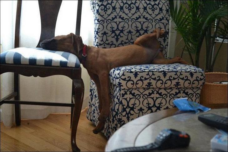 25 фото, чим зайняті собаки, коли господарів немає вдома - фото 21