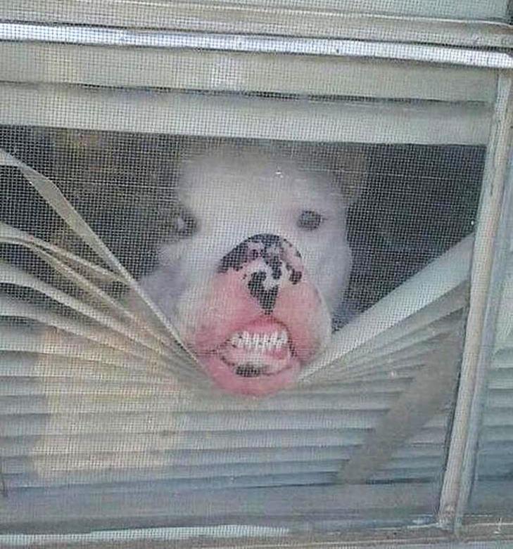 25 фото, чим зайняті собаки, коли господарів немає вдома - фото 7