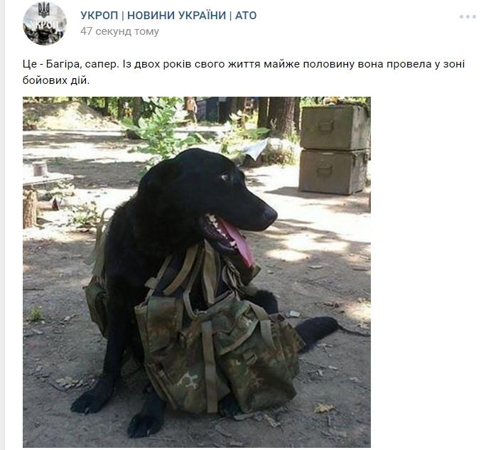 Чим займаються на Донбасі найкращі друзі бійців АТО - 10 - фото 12