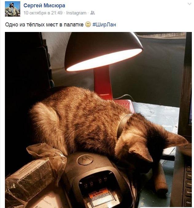 За що котам в АТО треба поставити пам'ятник-10 - фото 9