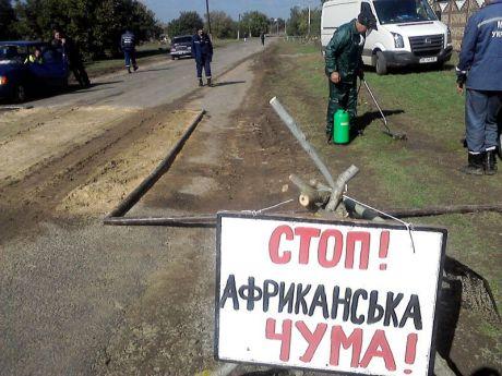 На Березанщині оголосили 40-денного терміну до зняття карантину по АЧС  - фото 1