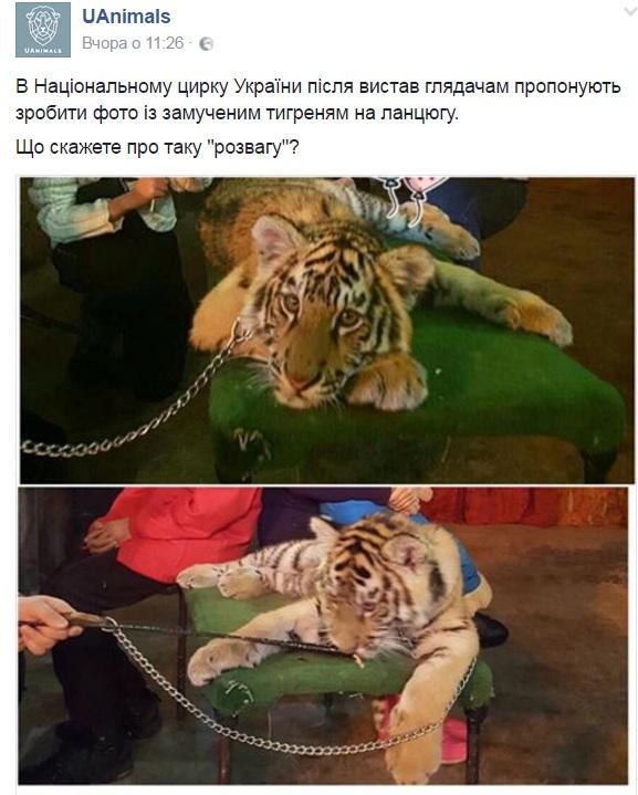 Тварини і тварюки: коли директори цирків самі полізуть в палаюче колесо - фото 4