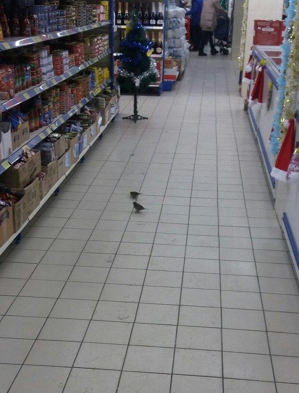 У мелітопольському супермаркеті оселилися горобці - фото 2