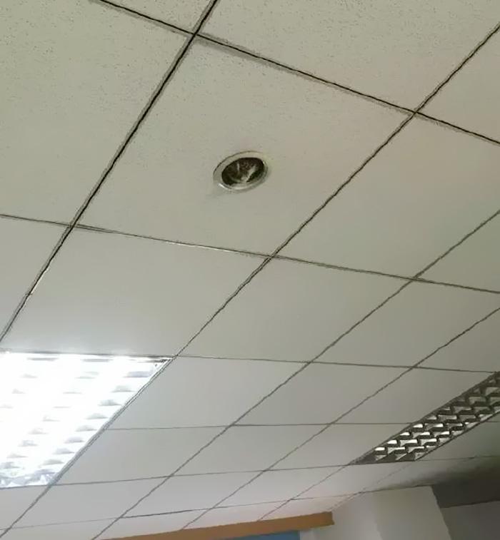 Як кошеня зі стелі за офісом шпигувало - фото 3