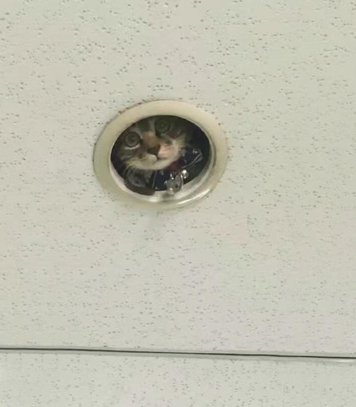Як кошеня зі стелі за офісом шпигувало - фото 2