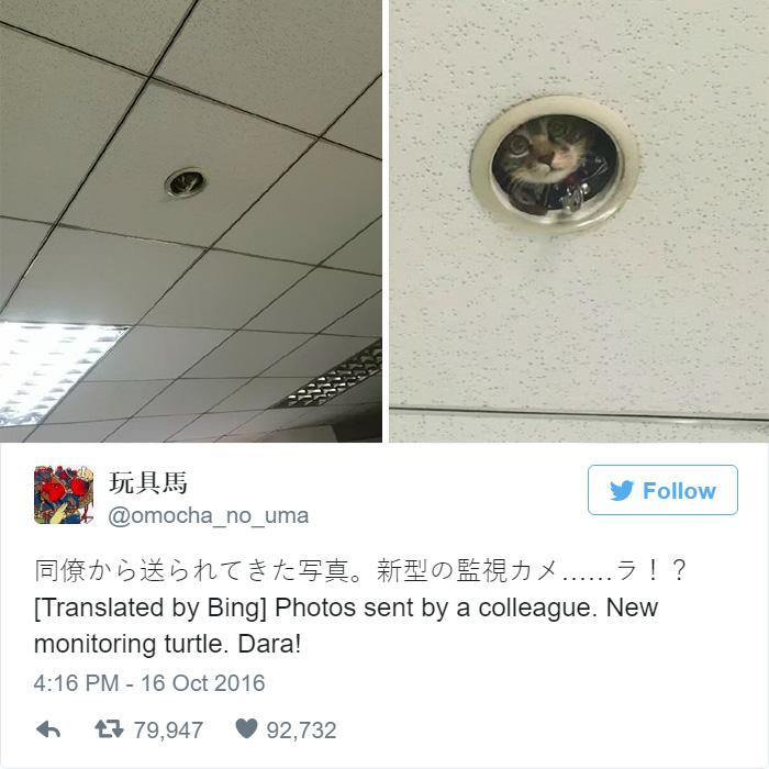 Як кошеня зі стелі за офісом шпигувало - фото 1