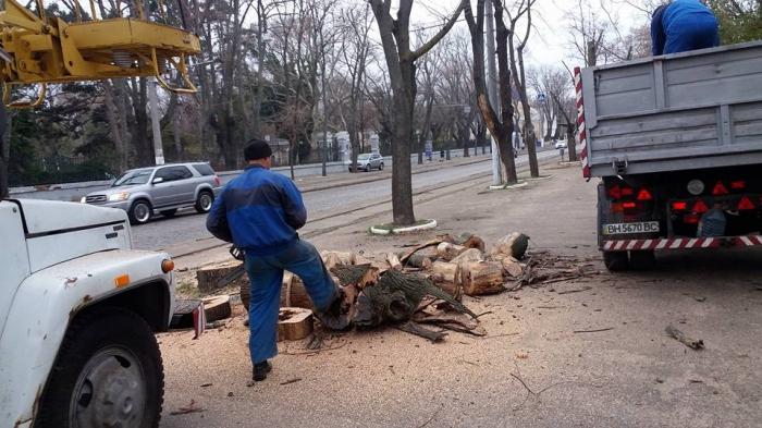 Французький бульвар Одеси потерпає від масштабного знищення дерев - фото 1