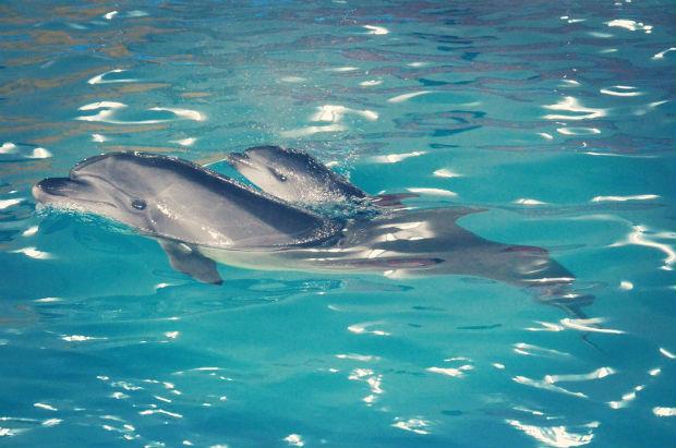 У харківському дельфінарії евакуйовані з АТО дельфіни привели поповнення (ФОТО) - фото 1