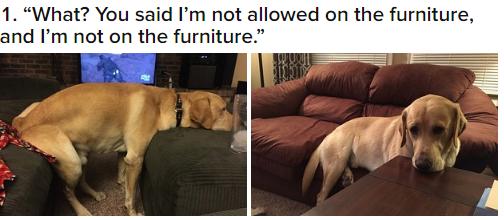 ТОП-7 собак, які навчились обходити домашні закони - фото 7