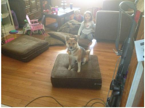 ТОП-7 собак, які навчились обходити домашні закони - фото 5