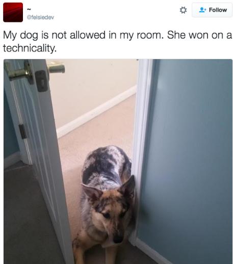 ТОП-7 собак, які навчились обходити домашні закони - фото 3