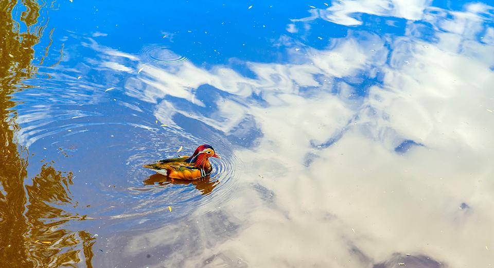 Страуси і піщані кар'єри: Як переселенка розвиває зелений туризм в зоні АТО - фото 12