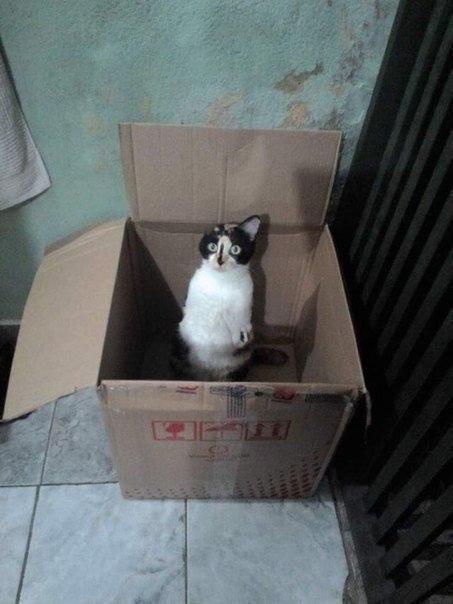 Як кішка-інвалід показує, що щастя існує - фото 3