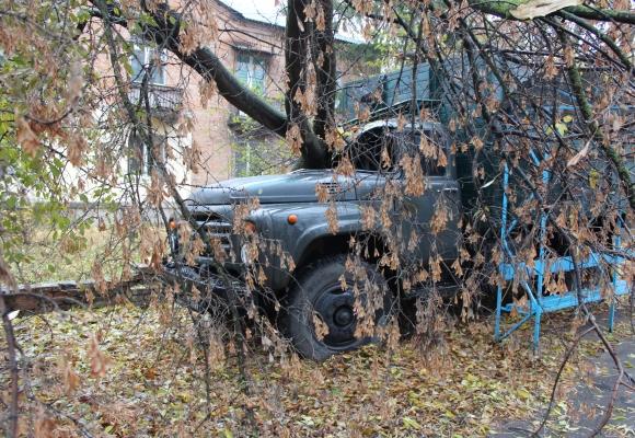 У Вінниці на зупинку громадського транспорту і припарковану машину впало дерево - фото 1