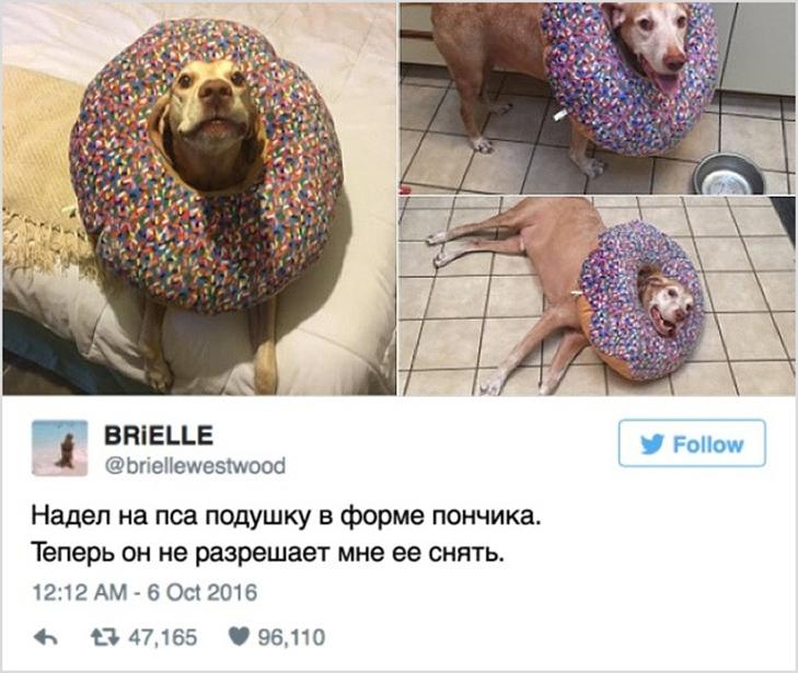 15 іскрометних твітів, які вас розсмішать - фото 14
