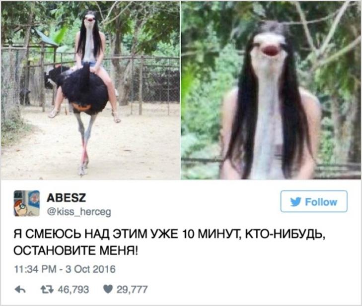 15 іскрометних твітів, які вас розсмішать - фото 4