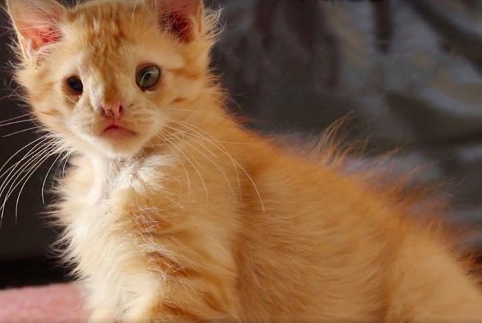 """Як """"огидний"""" кіт став зіркою мережі (ФОТО, ВІДЕО) - фото 1"""