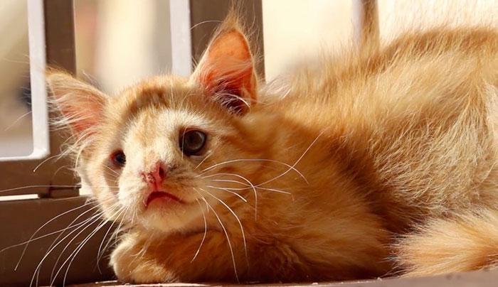"""Як """"огидний"""" кіт став зіркою мережі (ФОТО, ВІДЕО) - фото 2"""