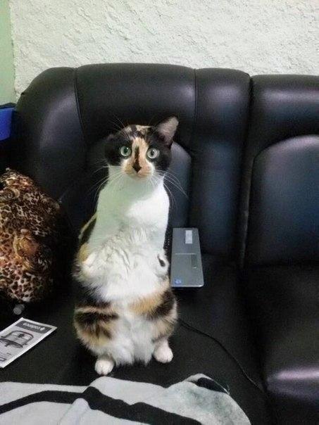 Як кішка-інвалід показує, що щастя існує - фото 2