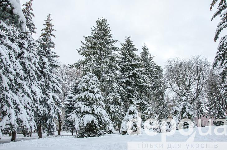 Прогулянка засніженою та казковою Вінницею (ФОТОРЕПОРТАЖ) - фото 21