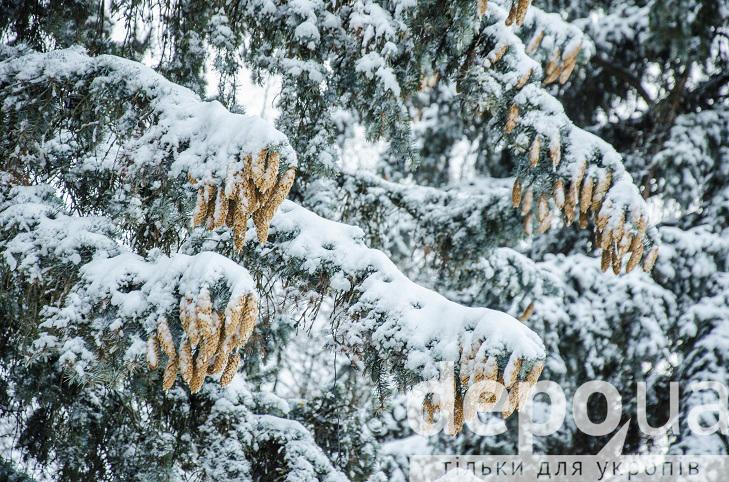 Прогулянка засніженою та казковою Вінницею (ФОТОРЕПОРТАЖ) - фото 23