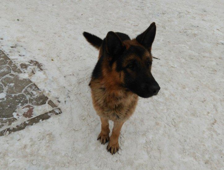 Прикарпатський Хатіко: У Калуші пес, мерзнучи, чекає господаря - фото 1