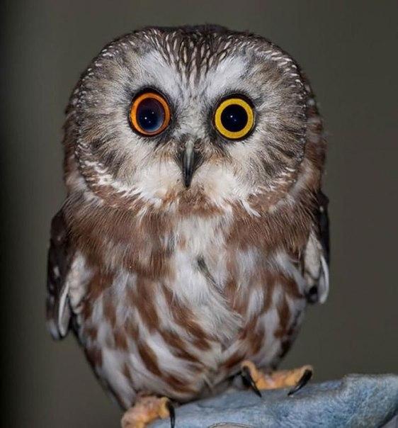Вісім неймовірно красивих тварин з різнокольоровими очима  - фото 1