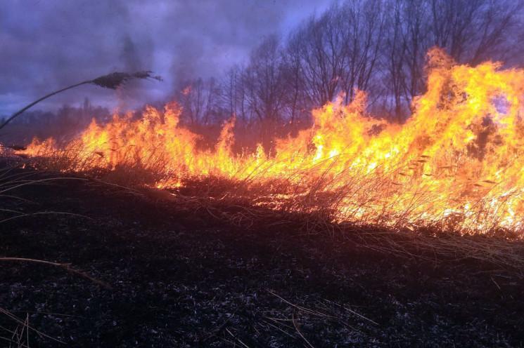 На Летичівщині вогонь знищив чверть гект…