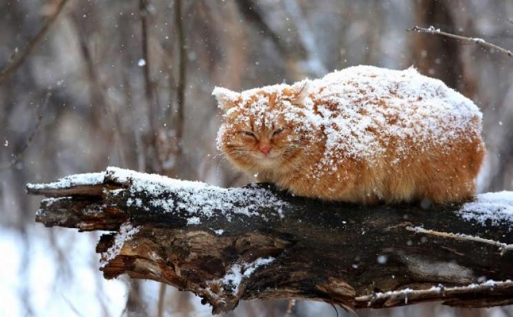 Погода приготувала сумчанам мокрий сніг…