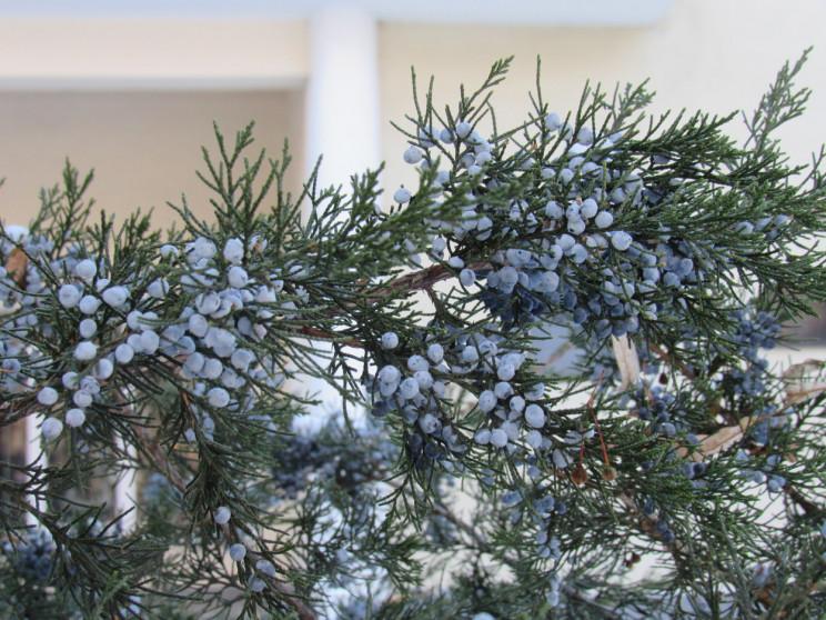 Сірий день: 25 січня у Черкасах буде хма…