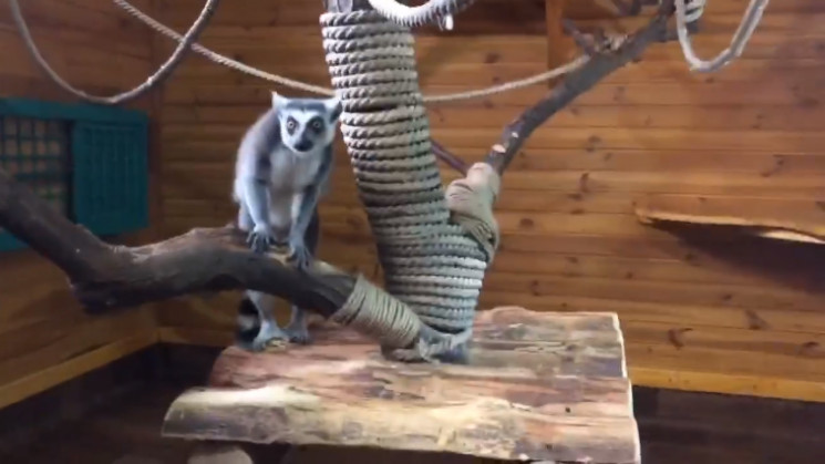 В бердянском зоопарке открыли новый зимн…