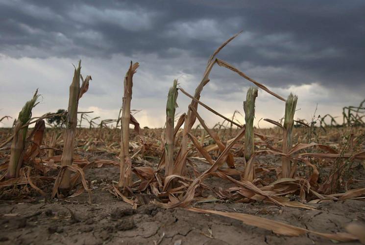 На Росії врожай може постраждати через т…