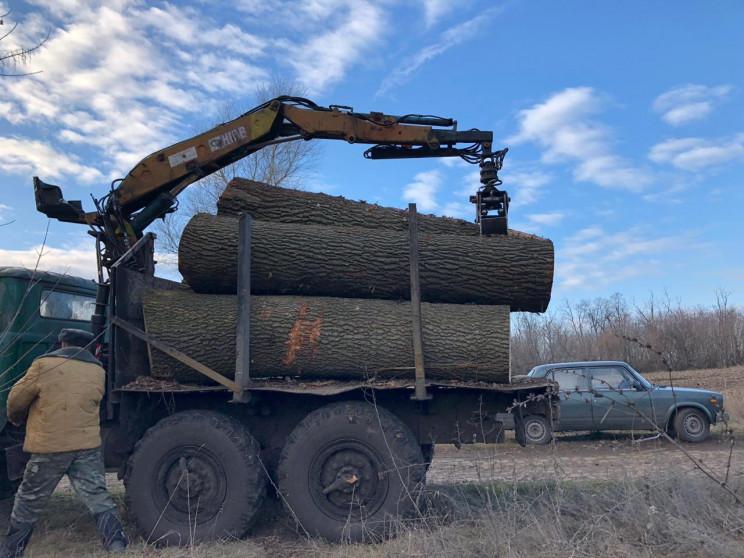 На Кропивнитчине объявили подозрение лес…
