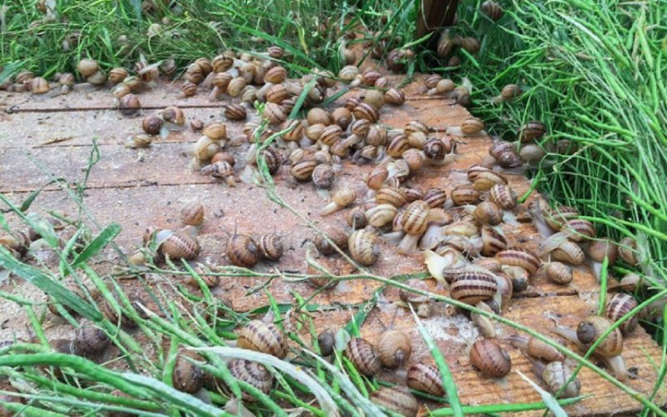 Фермери з Полтавщини експортували равлик…